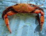Steamed Maryland Blue Crab
