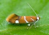 moths 1 Micros 0000 - 2512