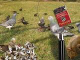 pigeon-pie.jpg