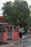 Osmaniye 2010 1934.jpg