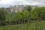 Trabzon 4880.jpg