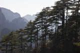 Huangshan or Yellow Mountain, China