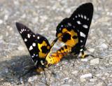 Moths_Tam Dao