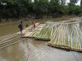adding a few extra bamboo poles