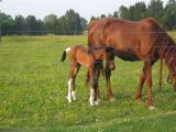 2006 May 25 Farm Animals