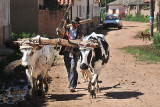 Farmer with oxen and hand plow