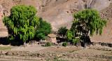 Small farm on highway between Potosi and Uyuni