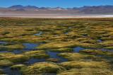 Laguna Roja in the Eduardo Alvaroa National Reserve, Southern Bolivia