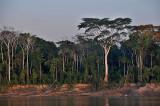Rio Ichilo River Bank