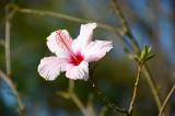 Traudi's Flower