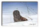 owl-jpg