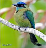 Costa Rican Colors