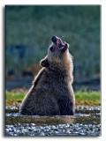 grizz-bug.jpg
