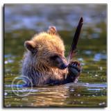 cub-feather-2.jpg