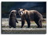 Mom--Cub-.jpg