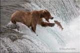 Alaska brown bear pbase.jpg