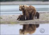 Bear reflection2.jpg