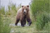 Bear Head on.jpg