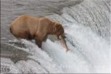 Alaska Brown with fish2.jpg