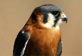 Nature's Studio - More Bird Photos