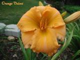 Orange Velvet.jpg