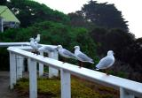 Seagull Gallery