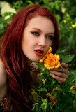 Yellow Rose of Friendship