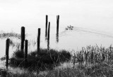 Bolinas Lagoon Shoreline