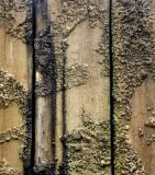Algae and Cement