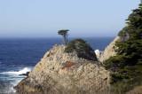 Coastline at Pt. Lobos