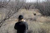 Buck in the Bosque