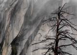 Sentinel Trees