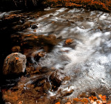 Stream / Red Aspen Leaves