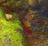 Creek Flora