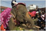 Surin Thailand Elephant  Festival