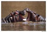 Jeux d'Hippos