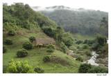 Jungle au nord de Chiangmai
