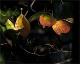 Close of Autumn