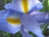 Blue and Violet