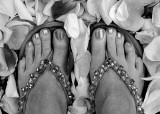 Petalled Toes