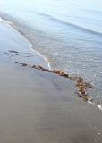 Seaweed Signature