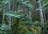 7 Deep Dark Forest