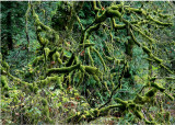 46 Mossy Branches