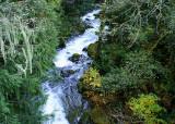 45 Rainforest River