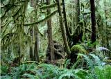 43 Cascade Forest