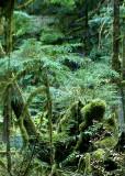 38 Moss Creatures