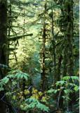 36 Forest Light