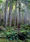34 Ferns, Moss, Trunks