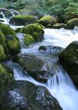 29 Rocks, Moss, Water
