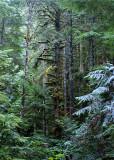 27 Forest Primeval